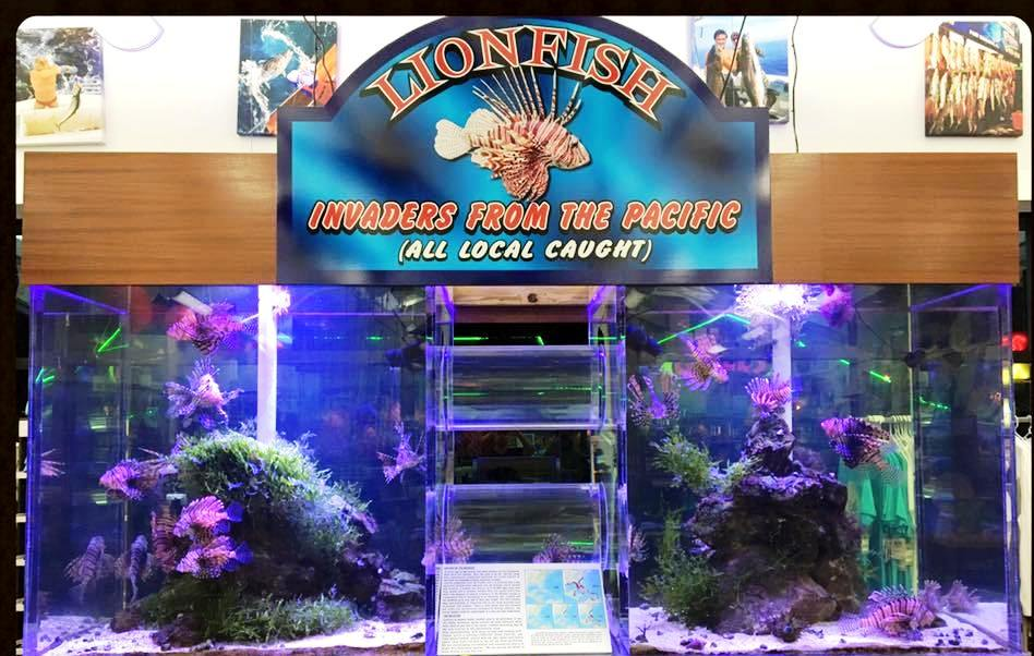 750 gal. Lionfish exhibit at Sunrise Marina that we maintain.
